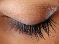 5 Things You Never Knew About Eyelashes